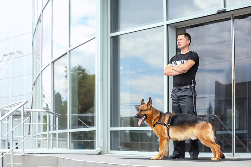 Security Guard Cv in Preston Lancashire